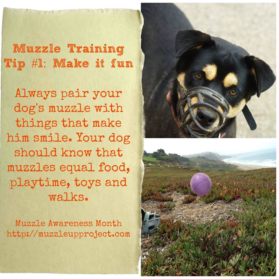 images How to Muzzle Train a Dog